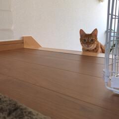 かわいい/ふわり/猫/ペット にゃん?