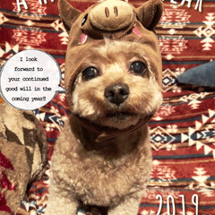 いぬバカ部/愛犬/トイプ/トイプードル/犬帽/いぬのいる暮らし/... 今年の年賀状用の一枚☺︎
