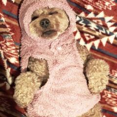 トイプ/ドッグウェア/犬服/ワンコ服/いぬバカ部/LIMIAペット同好会/... お散歩に行く為に服を着せてる途中で寝てし…(2枚目)