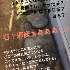 IRIS 超固まる防草砂15Kg 品番:C15-BR | アイリスオーヤマ(砂、砂利)を使ったクチコミ「中古物件なのです。 まだまだ改造途中。が…」(4枚目)