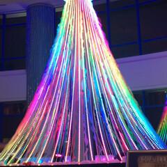 冬/おでかけ クリスマスツリー