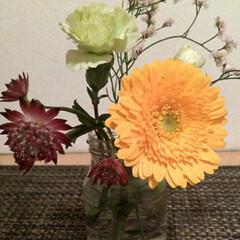 村上フラワー/Bloomee LIFE/花 今週のお花。 ・ガーベラ 黄色 ・キノロ…