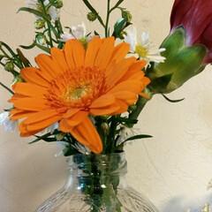 花の店ルフラン/花/Bloomee LIFE 今週のお花。 ・ガーベラ ・カーネーショ…
