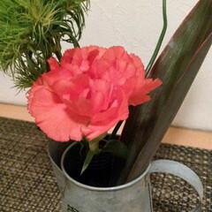 フラワーショップSARA/Bloomee LIFE/花 今週のお花。 ・カーネーション ・丹頂 …