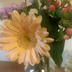 花すけ/花/Bloomee LIFE 今週のお花。 ・ガーベラ(ミノー) ・ヒ…