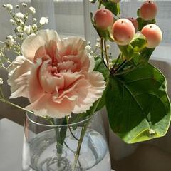 sobana.素花/Bloomee LIFE/花 今週のお花。 ・カーネーション(ドヌーブ…(1枚目)