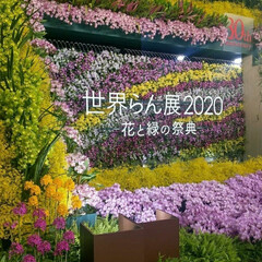 花/世界らん展 世界らん展に行ってきました。 お花に囲ま…