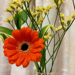 Bloomee LIFE 提携店/Bloomee LIFE/花 今週のお花。 ・ガーベラ ピッコリーニ(…(1枚目)