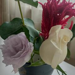 Aalsmeer/Bloomee LIFE/花 今週のお花。 ・バラ(白) ・ケイトウ(…(1枚目)