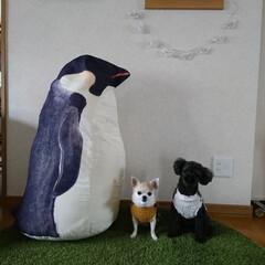 HIGHTIDE / ハイタイド / ポーラーベアーマネーボックス / シロクマ 貯金箱 / 白くま | HIGHTIDE(その他収納、ラック)を使ったクチコミ「ペンギンとマロンとこてつのスリーショット…」