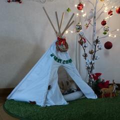サンタクロース/ナチュラルキッチン/オーナメントボール/オーナメント/ガーランド/クリスマスインテリア/... 寝ているマロンを隠し撮り📸🐶💤 スヤスヤ…