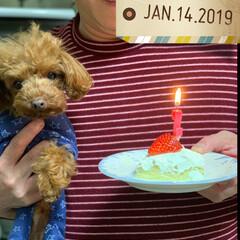 我が家の癒し/犬との暮らし/犬との生活/フォロー大歓迎/ペット/犬 我が家の癒し、サムが月曜日に 2歳になり…