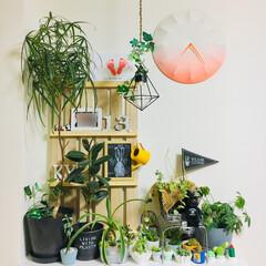 すのこ/幼児対策/フラッグ/グリーン/DIY/雑貨/... 屋内ミニガーデン