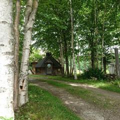 ガーデン/物置小屋/庭/風景写真 木材とか保管してる小屋を遠めにパチリ。 …