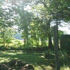 物置/風景写真/風景/ガーデン/庭 今日は朝から天気が良かったですね。 中は…(2枚目)