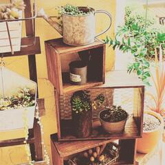 アラフォー主婦/多肉植物/おうち時間を楽しもう/DIY/インテリア/ハンドメイド/... 朝からもくもくDIY🔨  多肉ちゃんたち…(3枚目)