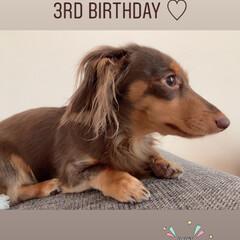 ペットがいる暮らし/ミニチュアダックスフント/ペット/お誕生日 きのう 7月30日は🐶💕マロンちゃん3歳…