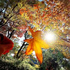 秋のお出掛け/ロープウェイ/紅葉シーズン/もみじ狩り もみじ狩り行ってきましたよん➰🍁🍂 紅葉…
