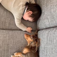 孫ちゃん/お昼寝タイム/愛犬と過ごす/暮らし マロンちゃんと孫ちゃんのお昼寝💤  マロ…