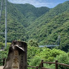 おでかけ/観光地/観光スポット/梅雨時期の晴れ間/アラフォー主婦/自然/... 【綾の照葉大吊橋】 ・高さ   142m…