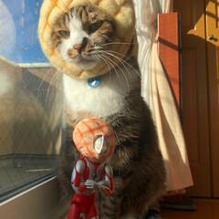 メロンパン/パン/猫/ウルトラマン/フィギュア/ミニチュア/... メロンパン兄弟