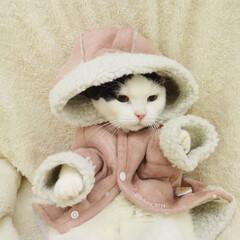 ペット仲間募集/にゃんこ同好会/ねこ 寒くてお布団から出たくない…
