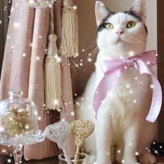 クリスマス/にゃんこ同好会/ペット仲間募集/にゃんこ/きらきら クリスマスまであとちょっと.。.:*・゚