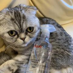 AquaX ペットのお手入れスプレー  | AquaX(アクアエックス)(その他ペット用品、生き物)を使ったクチコミ「うちは出目金猫様なので目やにが毎日すごい…」(2枚目)