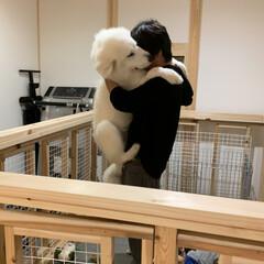 犬と猫のいる暮らし/超大型犬/犬サークル/DIY パパ手作りサークル内でパパ、あいらぶゆー…