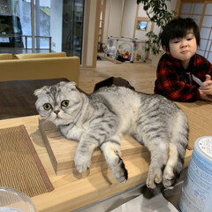カウンターキッチン/にゃんこ/キッチン まるでまな板の上の猫😆 台所に立つと必ず…(2枚目)