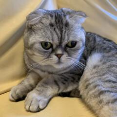 AquaX ペットのお手入れスプレー  | AquaX(アクアエックス)(その他ペット用品、生き物)を使ったクチコミ「うちは出目金猫様なので目やにが毎日すごい…」(3枚目)