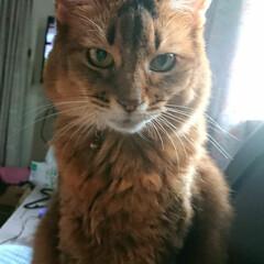 おはよう/マリリン/猫 おはようございます 涼しい朝です いつも…