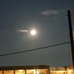 月/夜 今夜も月が綺麗だなと思ったら 明日が満月…