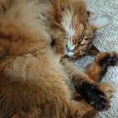 ダイソー/11才おめでとう/ビビアン/猫と暮らす/フォロー大歓迎 先日リミアで教えてもらった可愛いペット用…(3枚目)