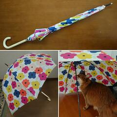 傘/セリア/令和元年フォト投稿キャンペーン/フォロー大歓迎/にゃんこ同好会/LIMIAインテリア部 梅雨に入る前に傘を買いました 鬱陶しいお…
