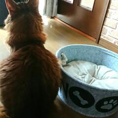 ダイソー/11才おめでとう/ビビアン/猫と暮らす/フォロー大歓迎 先日リミアで教えてもらった可愛いペット用…(2枚目)