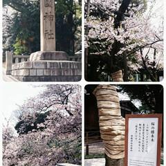 桜/靖国神社/フォロー大歓迎 用事で出かけたそばに靖国神社があったので…