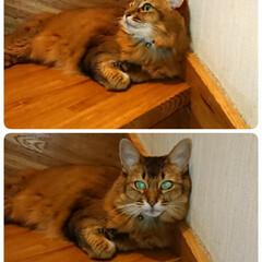 おめでとう/マリリン/フォロー大歓迎 最近は暑いからか 寝るまで 階段のここで…