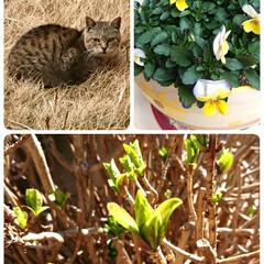 暮らし/庭にお客様/お花/フォロー大歓迎 カーテンを開けたら可愛いお客様が…🐱 葉…