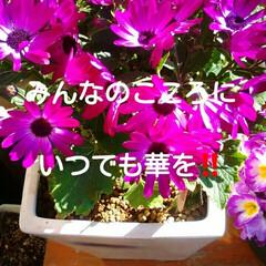 ウクレレ/フォロー大歓迎/風景/住まい/雑貨だいすき 私は、沖縄の華という曲がとても好きだ‼前…