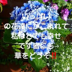 色んな花/LIMIAおでかけ部/フォロー大歓迎/おでかけ/風景/住まい/... 綺麗すぎてついいっぱい取りました🎵