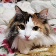 LIMIAペット同好会/フォロー大歓迎/はじめてフォト投稿/ペット/ペット仲間募集/猫/... おはようにゃ🐱✨ 遊んだにゃ🐈🐾✨