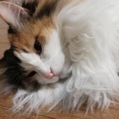 家猫/可愛い/保護猫/フォロー大歓迎/ペット/ペット仲間募集/... おはようございます🐈💕(2枚目)