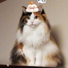 あけおめ/ペット/ペット仲間募集/猫/にゃんこ同好会 今年も宜しくお願い致します💕✨