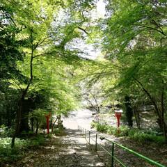 新田神社/鹿児島/春の一枚/LIMIAペット同好会/フォロー大歓迎/風景