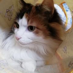猫/うちの子ベストショット/フォロー大歓迎/LIMIAファンクラブ/LIMIAペット同好会/にゃんこ同好会 おはようにゃ🐱💕✨(2枚目)