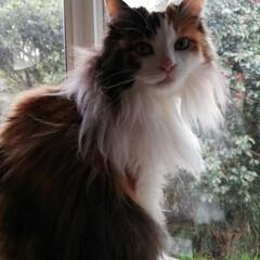 LIMIAペット同好会/フォロー大歓迎/はじめてフォト投稿/ペット/ペット仲間募集/猫/... おはようにゃ😺✨ 早起きして、こたつの中…