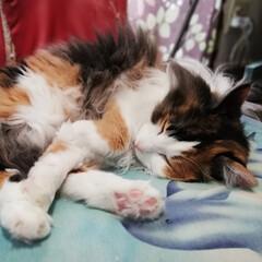 保護猫/三毛猫/LIMIAペット同好会/フォロー大歓迎/ペット/ペット仲間募集/... おはようにゃ🐱💕✨