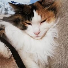 おやすみなさい/LIMIAペット同好会/フォロー大歓迎/ペット/ペット仲間募集/猫/... 湯タンポと毛布を掛けました🐈🐾