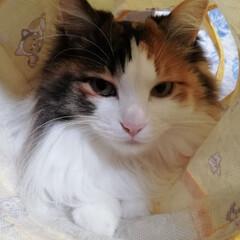 猫/うちの子ベストショット/フォロー大歓迎/LIMIAファンクラブ/LIMIAペット同好会/にゃんこ同好会 おはようにゃ🐱💕✨(1枚目)